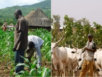 Farmers and Herdsmen